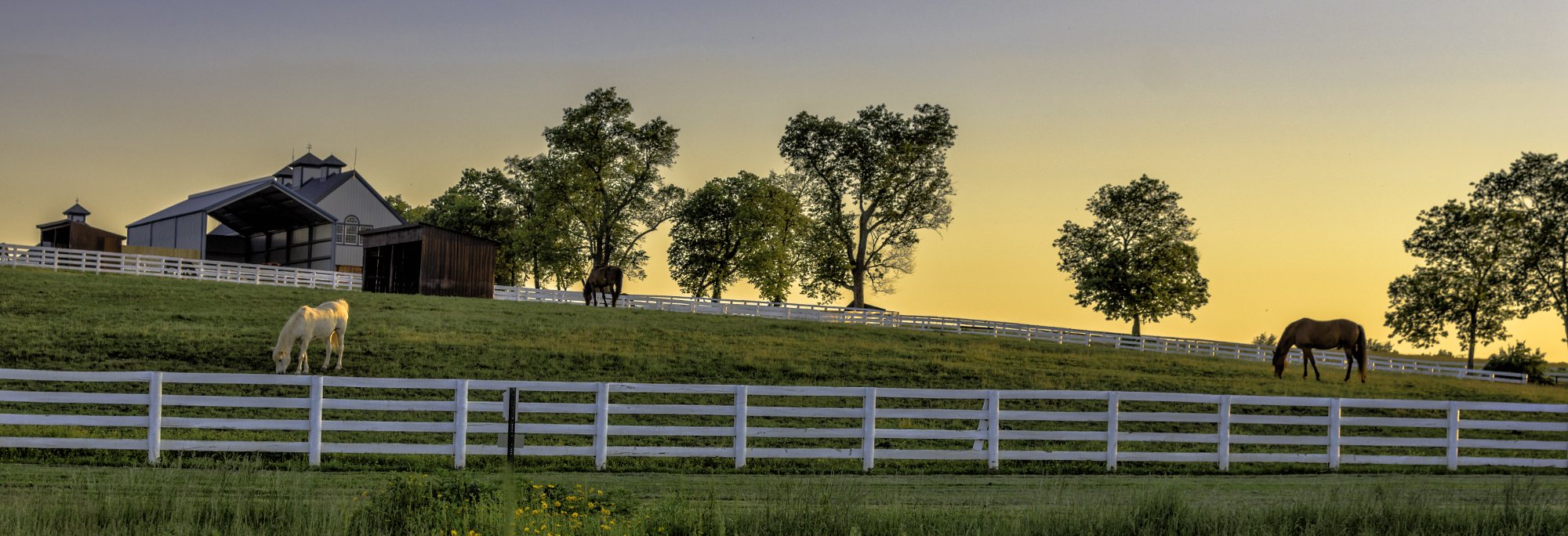 Horse Farm with Two Horses in a Pasture at Sunrise
